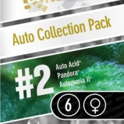 Auto Collection pack #2 Feminised Seeds
