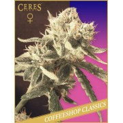 Ceres Easy Rider Autoflowering Feminised Seeds