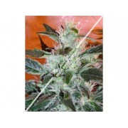 Lowryder #2 Autoflowering Regular Seeds