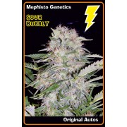 FREE SEEDS from Mephisto Genetics - Sour Bubbly Auto - Freebie worth €18