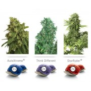 Colour Mix 7 – Autoflowering Feminised Seeds