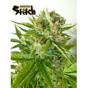 Onyx Autoflowering Feminised Seeds - 3
