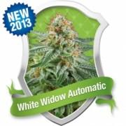 White Widow Automatic Feminised