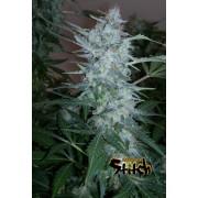 White Sirius Autoflowering Feminised Seeds - 3